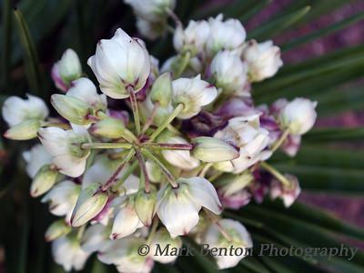 Bloom Geometric