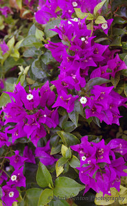 A Burst of Violet