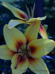 Artistic Bloom