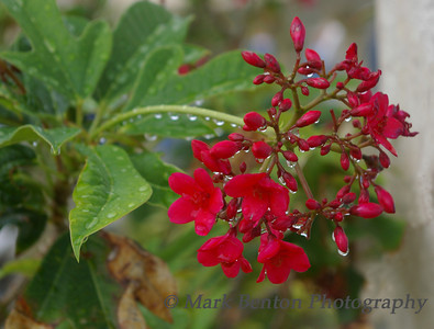 Raindrops in Red