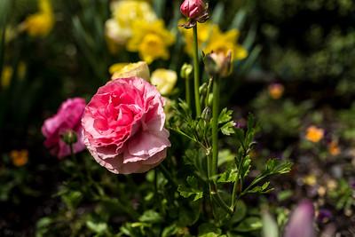 Flowers Outside Bellagio Condo