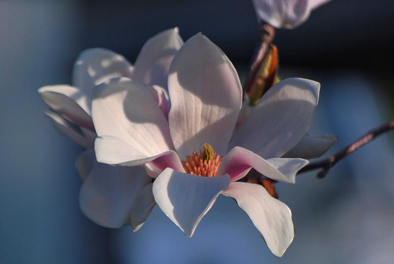 White-Blossom-069-C