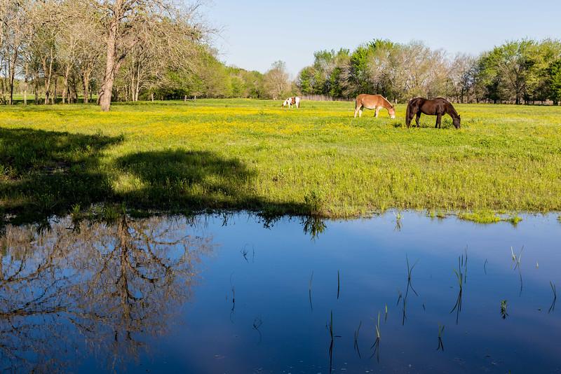 Pastoral scene along the Independence Rd, near Brenham, TX