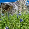 Old Baylor, Independence, TX