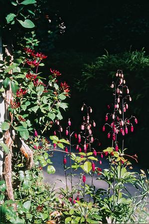 Bodnant Gardens Slides