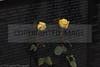 Vietnam Veterans Memoria 1