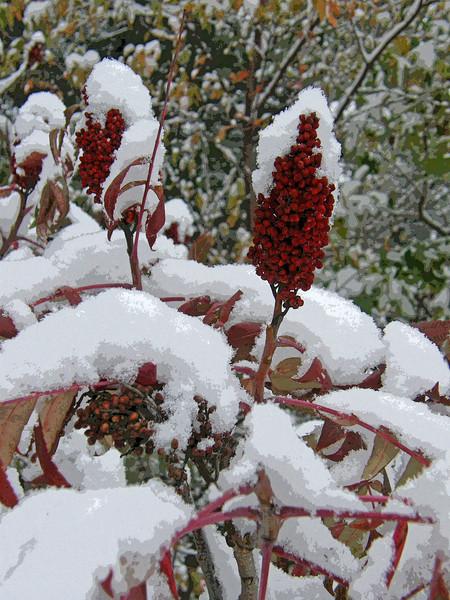 sumac snow