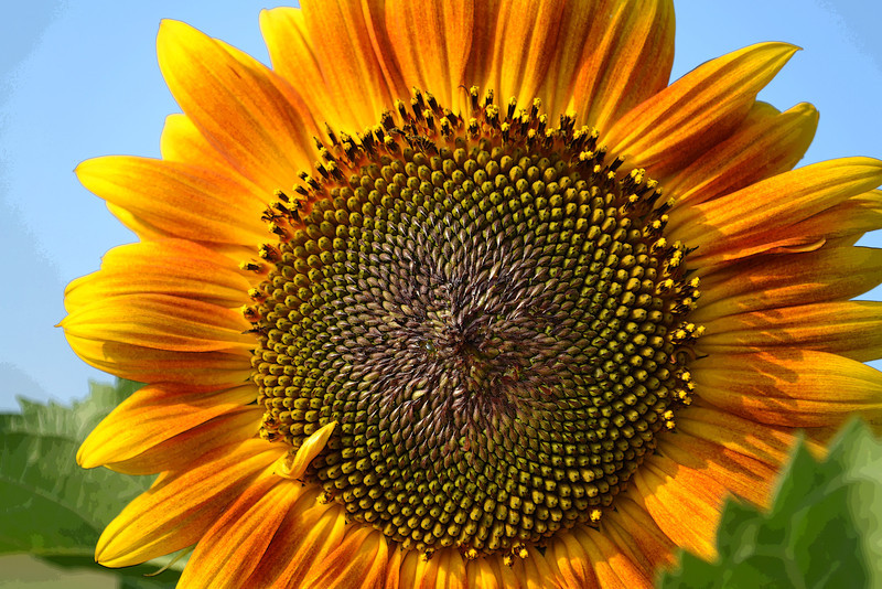 Sunflower Cheer<br /> Every home should have sunflowers whether inside or out!
