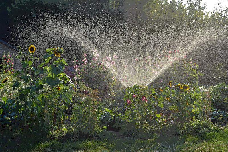 Garden Sprinkler Picture
