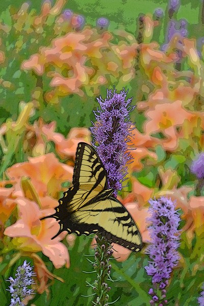 Swallowtail Butterfly on Blazing Star