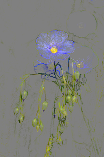 Blue Flax Art