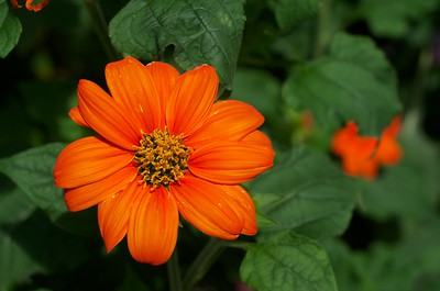 Orange flower in a field of green