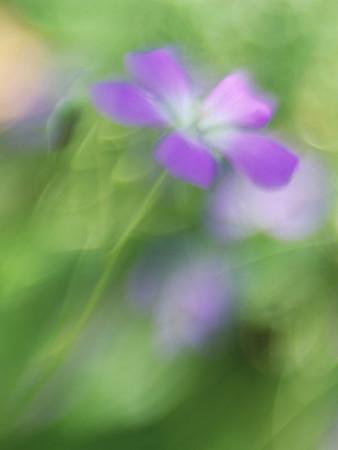 Bots (LensBaby flower shots)