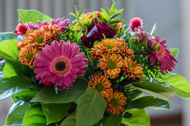 Flowers / HDR
