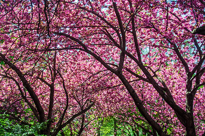 Brooklyn Botanical Garden 2015