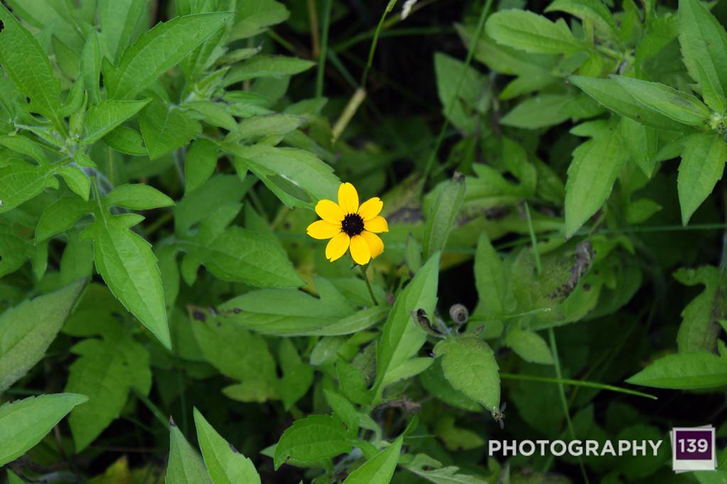 Orphaned Flowers