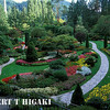 Butchard Gardens- the Sunken garden. Notice any strange about this picture- no people!  I came very early and I was the first person in line. When they opened the gates, I ran to this spot and took the shot. Outside of Victoria, BC Canada