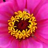 DSC_0655 color, hue