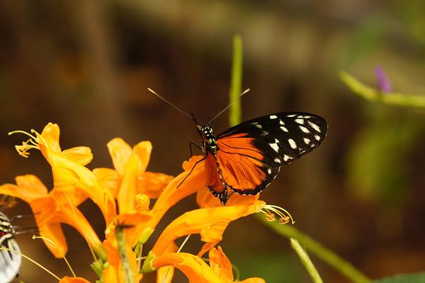 butterflyworld 11 18 2012