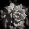 Small succulent at Tohono Chul