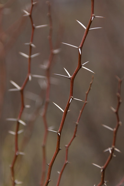 Simple beauty in the desert still has thorns