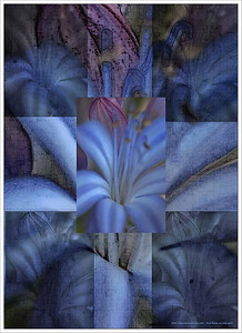 "38-Blue Flower on Bike Path Abstract.  This began as a poor photo of a blue flower.... yet always wanting to redeem everything, I framed the poorness differently, transposed it, creating one of my favorite images....  I am reminded that ""all things work to the good of God, and those who love Him""..... and how even the poorest of beginnings, even the most difficult of life's circumstances, can be transformed by how we frame them."