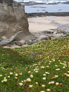 106 - Moss Landing, CA.  When I first came to California, I immediately fell in love with the ice plants, littering the coast with brilliant colors... reminds me of a carpet with colored sprinkles dropped like crumbs from a hastily eaten cupcake!