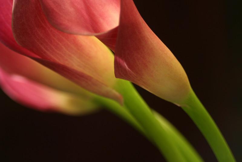 Flower 033c (Daisy)