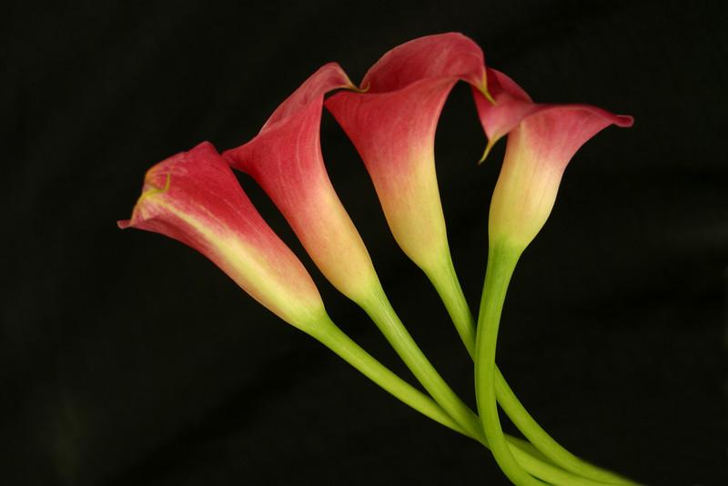 Flower 033a (Daisy)