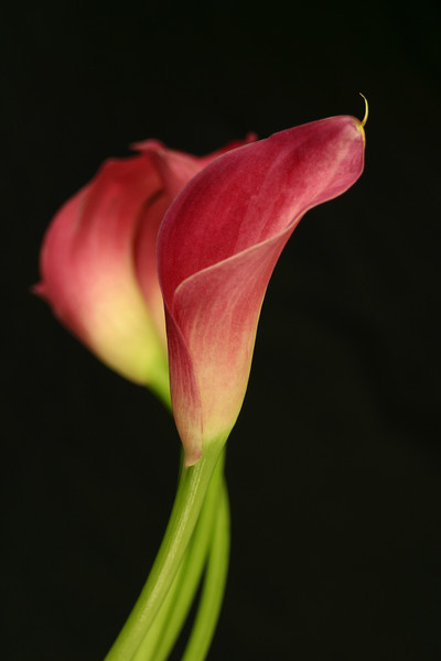 Flower 033g (Daisy)