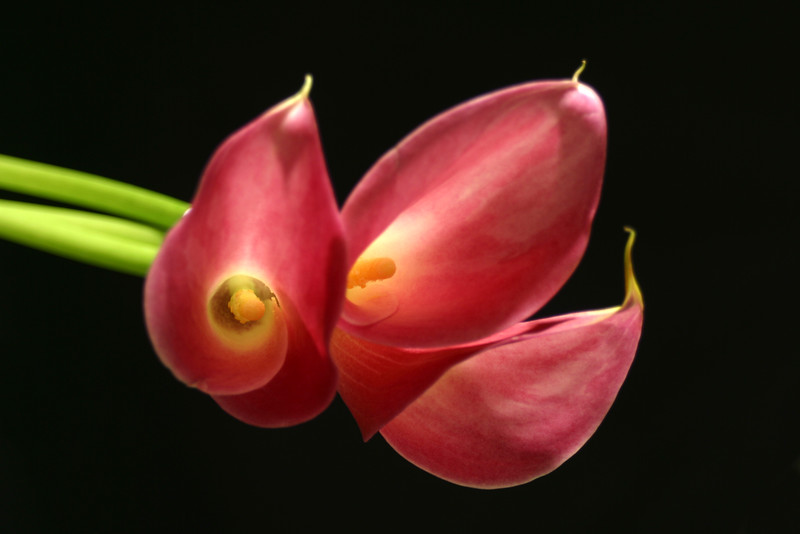 Flower 033b (Daisy)