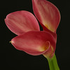 Flower 033f (Daisy)