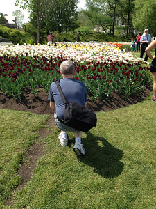 Shooting The Tulips