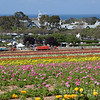 Flower Fields by the Ocean