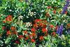 (960301) Northern Sierra Garden