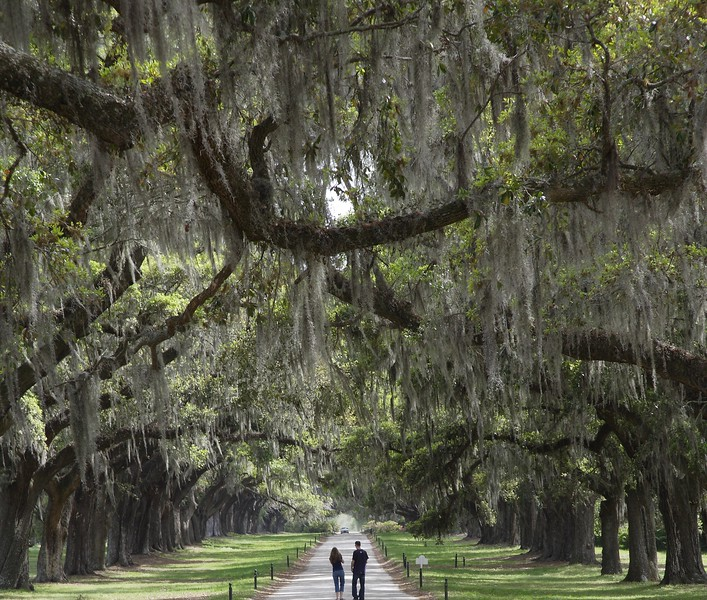 Boone Hall Plantation ~ near Charleston, SC <br /> ~ Image by Martin McKenzie, all rights reserved ~<br />  © copyright digitally watermarked / filigrane numérique copyright ©