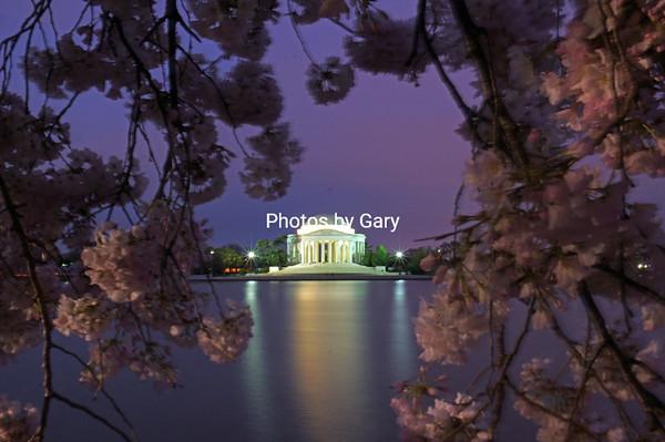 Cherry Blossom Festival, Washington DC, March 2016