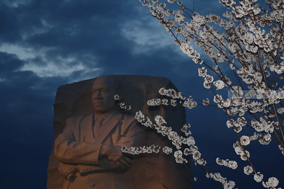 2012 Cherry Blossoms and MLK Memorial - Wash, DC
