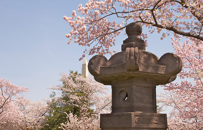 Another view of the Japanese lantern and the Washington Monument.