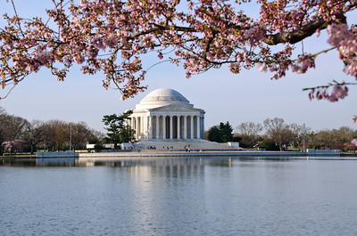 Cherry Blossoms in DC