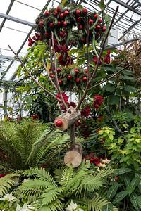 Christmas Flower Show 2017