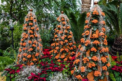 Christmas Flower Show 2018
