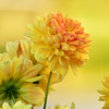 Flowers : 1 gallery with 256 photos