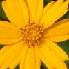 Flowers-104