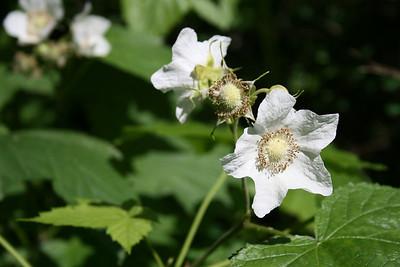 Wildflowers of Nova Scotia