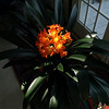 Clivia Clivia, Leonardtown, MD, May 3, 2008