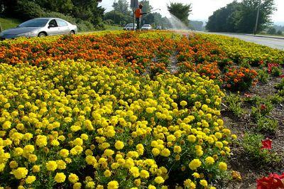 Community Flowers