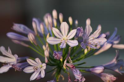flowers_0017