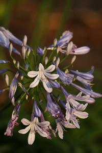 flowers_0015