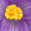 Flower 075d
